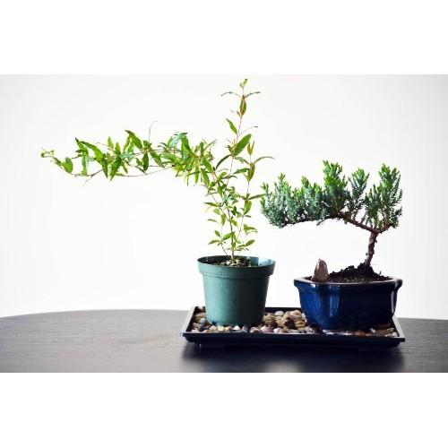 9GreenBox Bonsai Humidity Drip Tray with Pebbles Rocks, 8-Inch x 1...