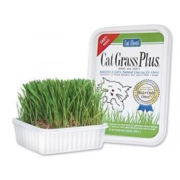 Cat Supplies Cat Grass Plus 150Gm Pack of 12