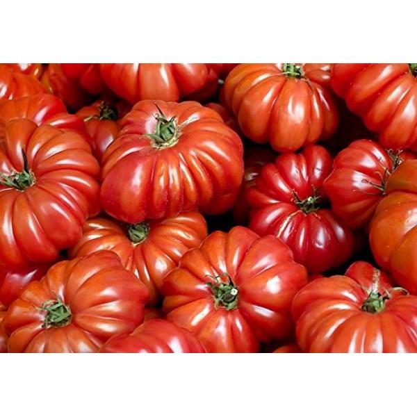 30+ Costoluto Genovese Pomodoro Tomato Seeds, Heirloom Non-GMO, Lo...