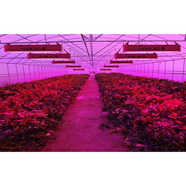 King Plus 3000W LED Grow Light Full Spectrum for Greenhouse and In...