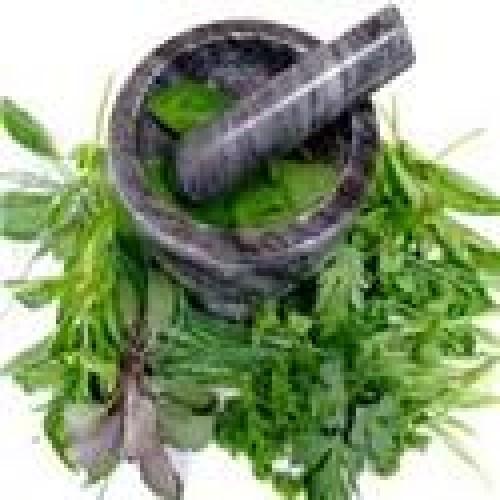 ALCAT 40 Male Herbs Panel