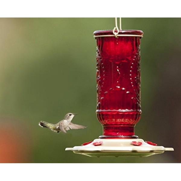 More Birds Hummingbird Feeder, Glass Hummingbird Feeders, Red, 5 F...