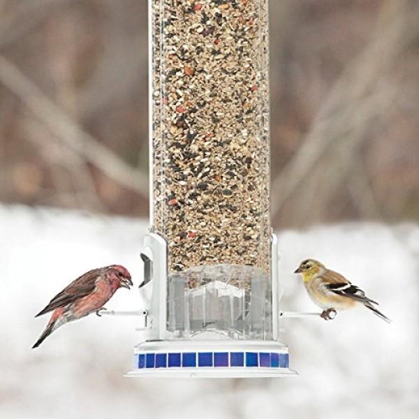 More Birds X-3 Squirrel-Proof Bird Feeder with 5-Pound Bird Seed C...