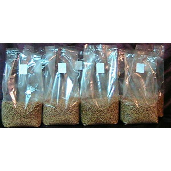 1 Bag of 3 lbs sterilized Grain Berries Substrate, Mushroom Spawn ...