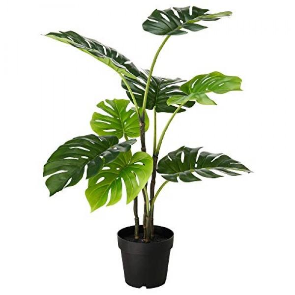 House Plant Fertilizer - Complete Slow Release Formula + Micro Nut...