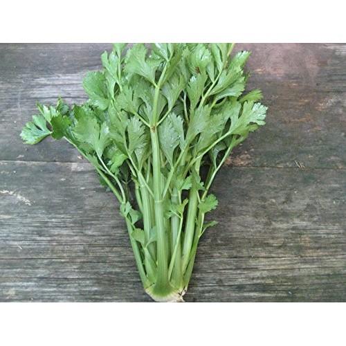 Celery Tall Utah Great Heirloom Vegetable ~ Bulk WHOLESALE 1 LB Seeds